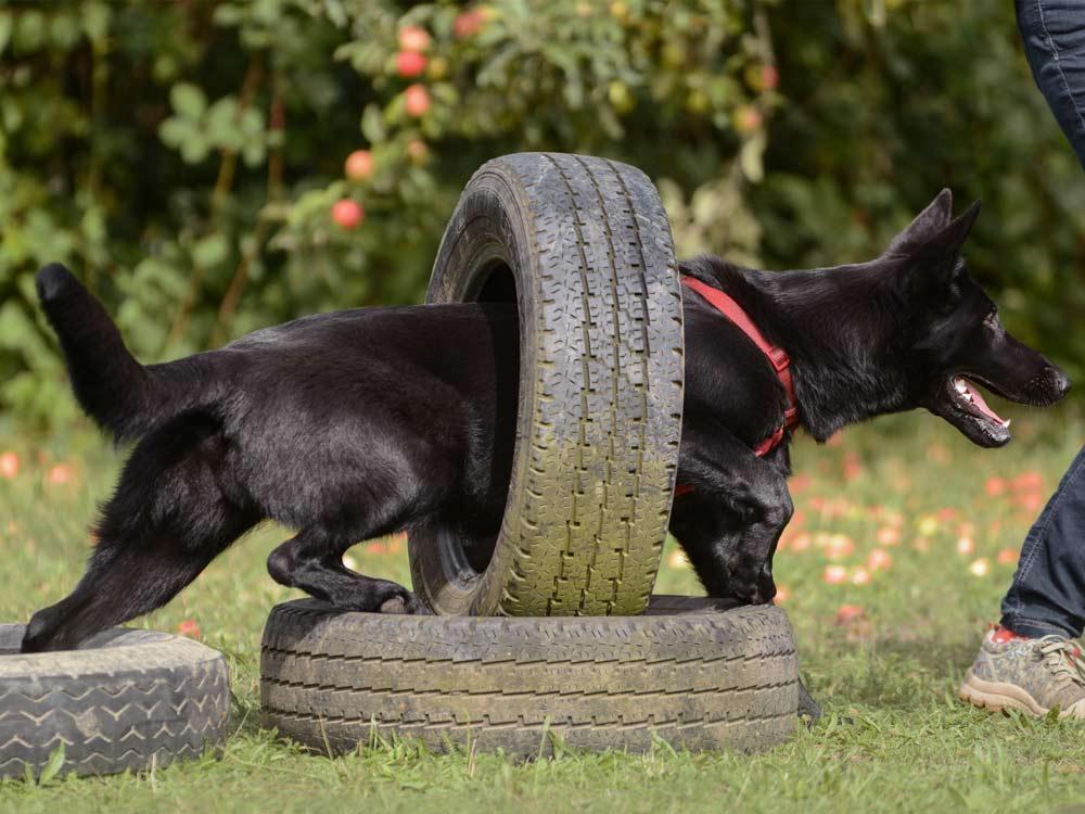 Junghunde, vertraute Pfoten