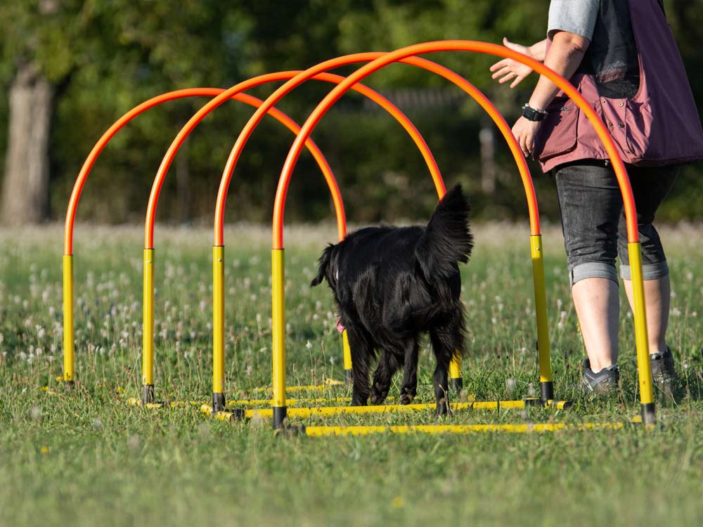 vertraute Pfoten, Hoopers Agility