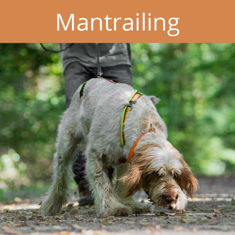 mantrailing, Vertraute Pfoten, Alltagstraining, Doggy-Fitness