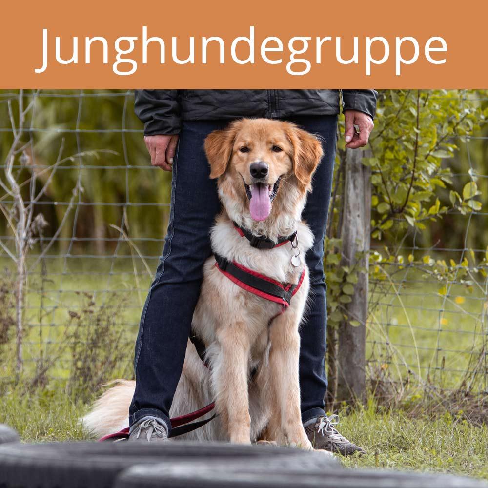 Junghunde, vertraute Pfoten, Alltagstraining, Doggy-Fitness