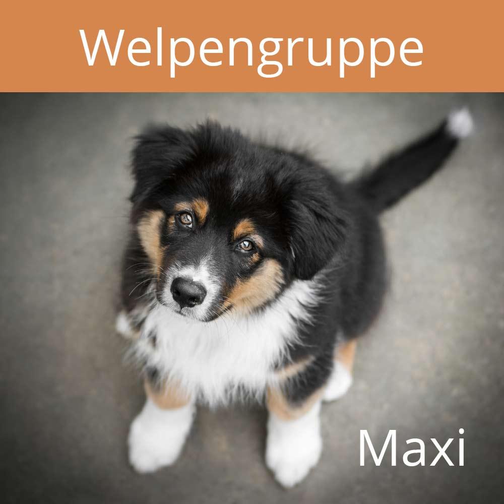 Welpen, maxi, vertraute Pfoten, Alltagstraining, Doggy-Fitness