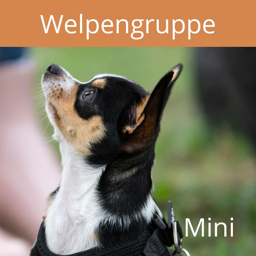 Welpengruppe, mini, vertraute Pfoten, Alltagstraining, Doggy-Fitness
