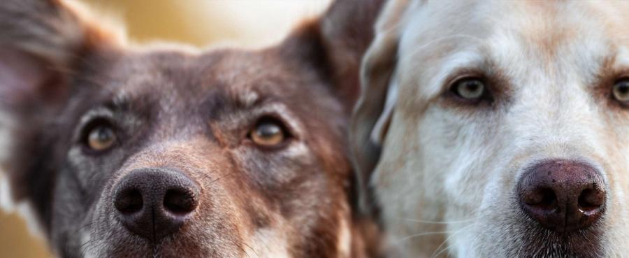 Hund, vertraute Pfoten, Nasenarbeit