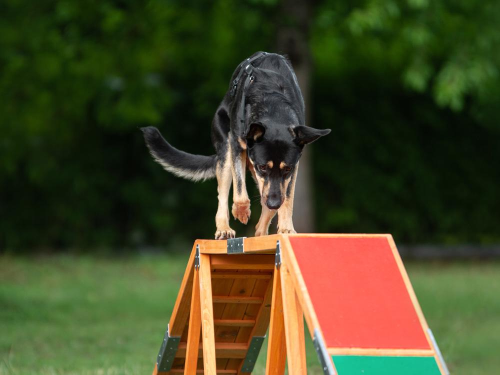 doggy fitness, vertraute Pfoten