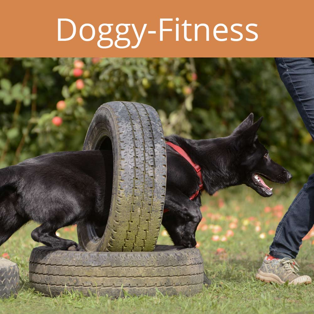 doggy fitness, Alltagstraining
