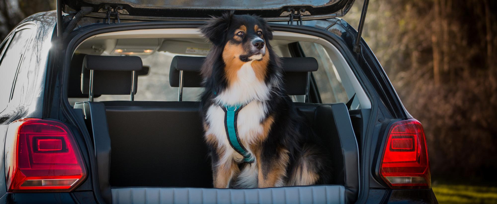 vertraute Pfoten, Hundeführerschein